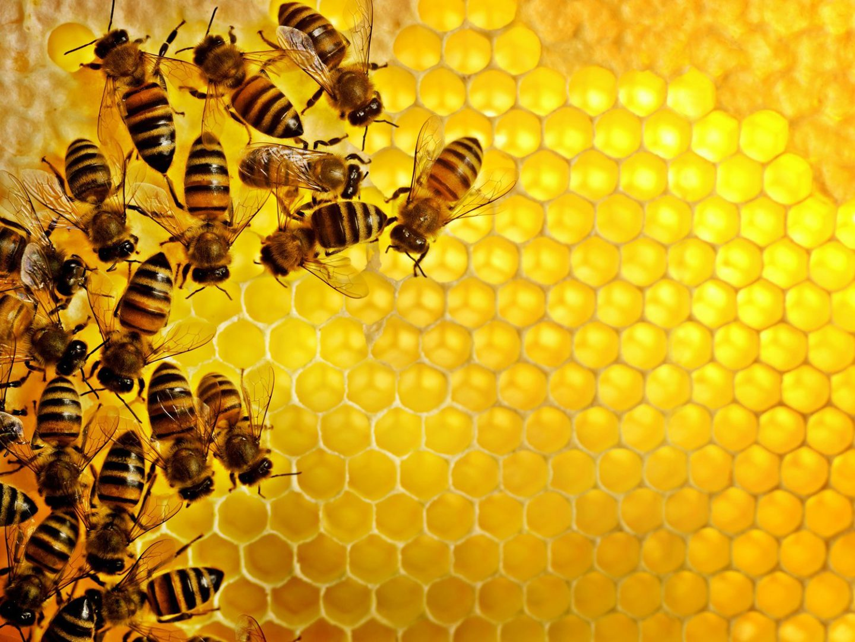 Знают ли пчелы хозяина