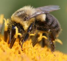 Пчелы - это удивительно организованные существа