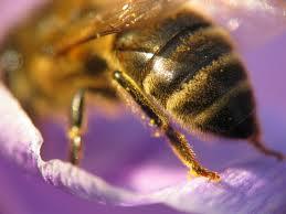 И пчелы роиться не будут