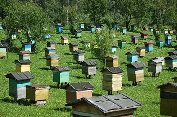 Новое жилье пчел