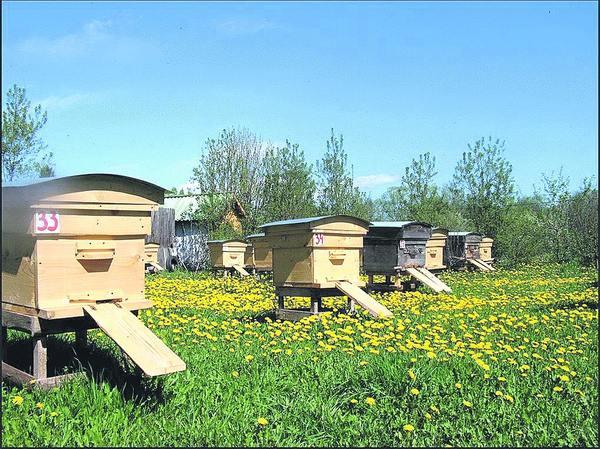 Семья медоносных пчел.Часть 5