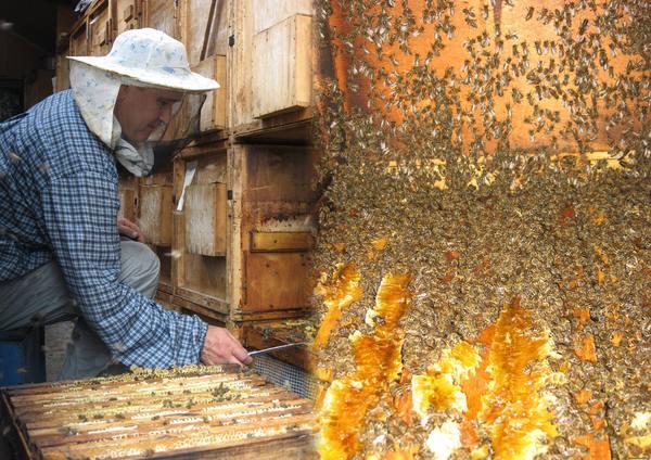 Температурный режим в пчелиной семье