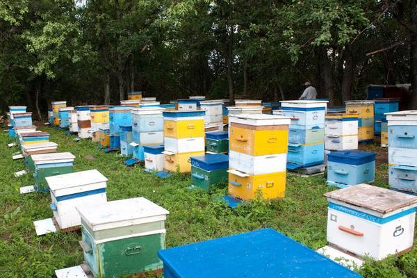 Профилактика пчелы, анти-варроатоза (21.08.2016) пасека