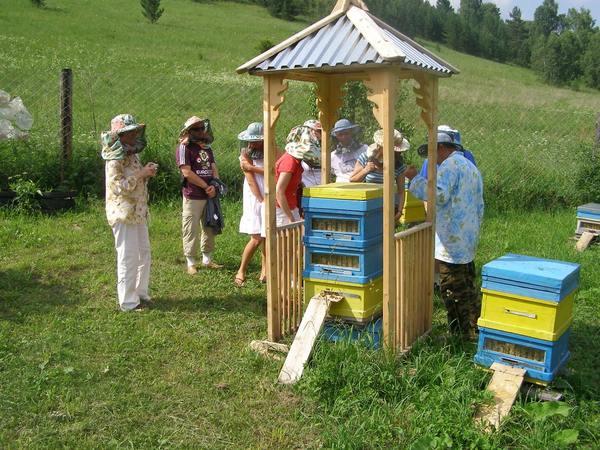 Гнездо пчелиной семьи