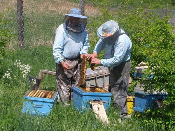 Меры борьбы с болезнями пчелиной семьи.Часть 3