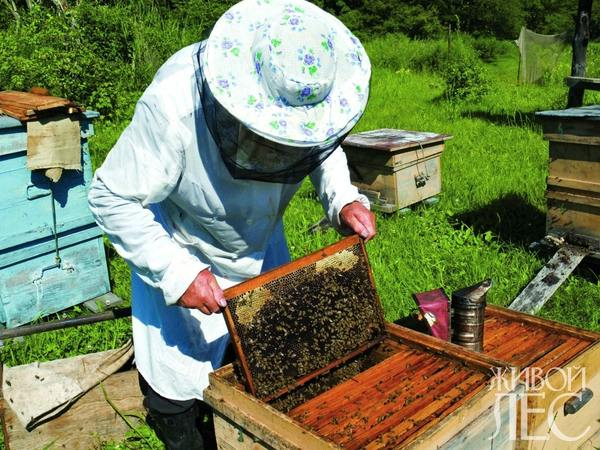 Семья медоносных пчел.Часть 2