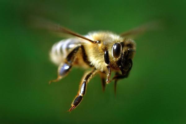 Зимовка пчел.Часть 2