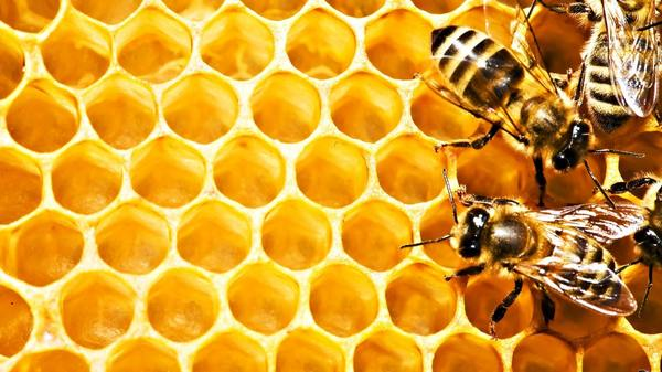 Мультики для детей. Пчелиные Истории: Лучший друг пчелы, серия 18