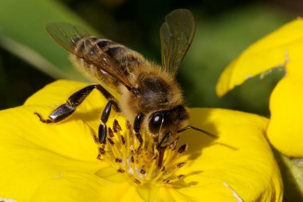 Посадка пчел в улей