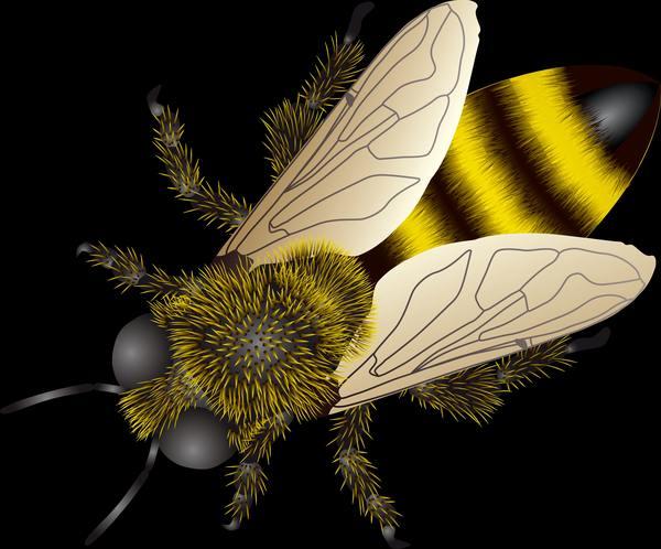 Сбор весенней пыльцы