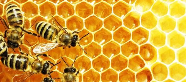 О пчёлах