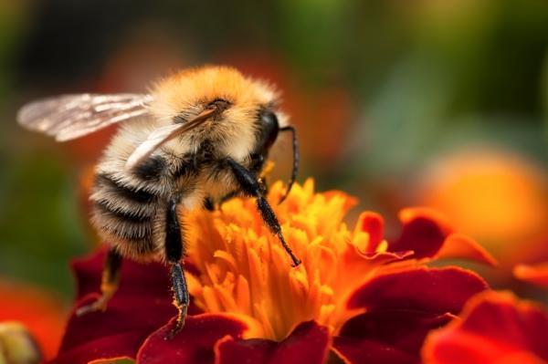 Подготовка пчел к зиме.Часть 2